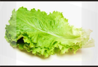 daun salada