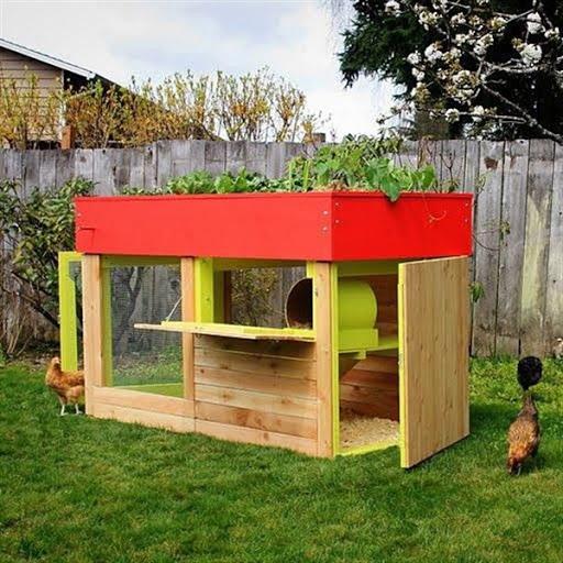 contoh gambar model rumah kandang ayam desain unik minimalis modern dari kayu terbaru 2015/2016