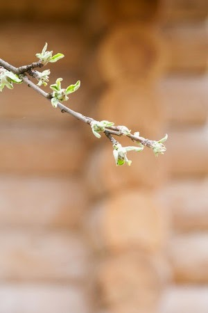 Spring Cleaning Your Log Cabin