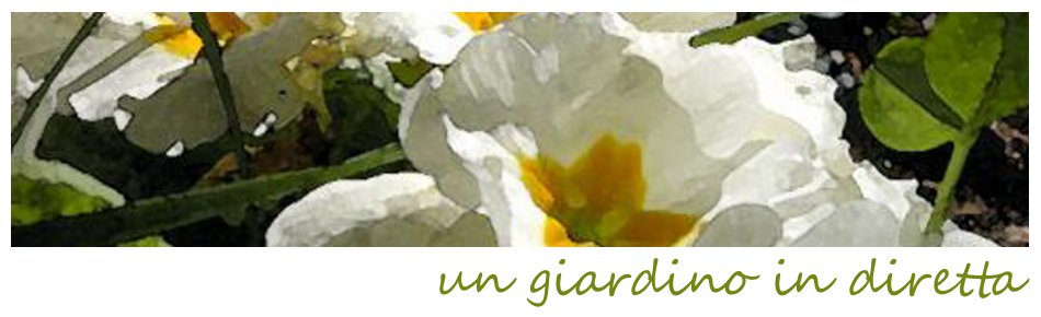 un giardino in diretta