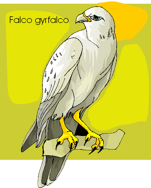 Gyrfalcon Free Clipart