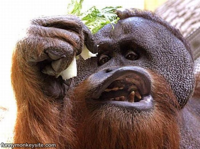 Funny Face Funny Monkey Face