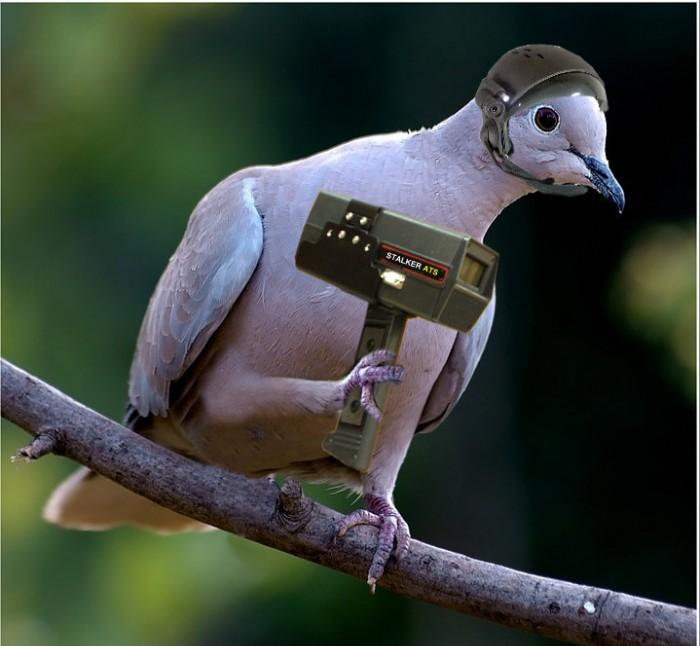 Funny Pigeons Latest Funny Pictures | Funny And Cute Animals