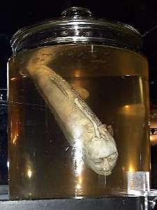pescado con cara de hombre en un frasco