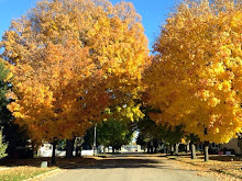 Trees in Minnesota
