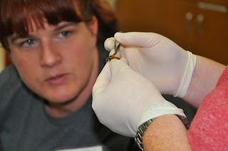 Teacher examines key features to identify insect.