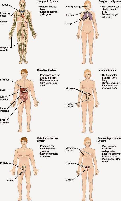 Sistemas del Cuerpo Humano - Dr. Alberto Sanagustín