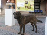 Primer asistente a la exhibición