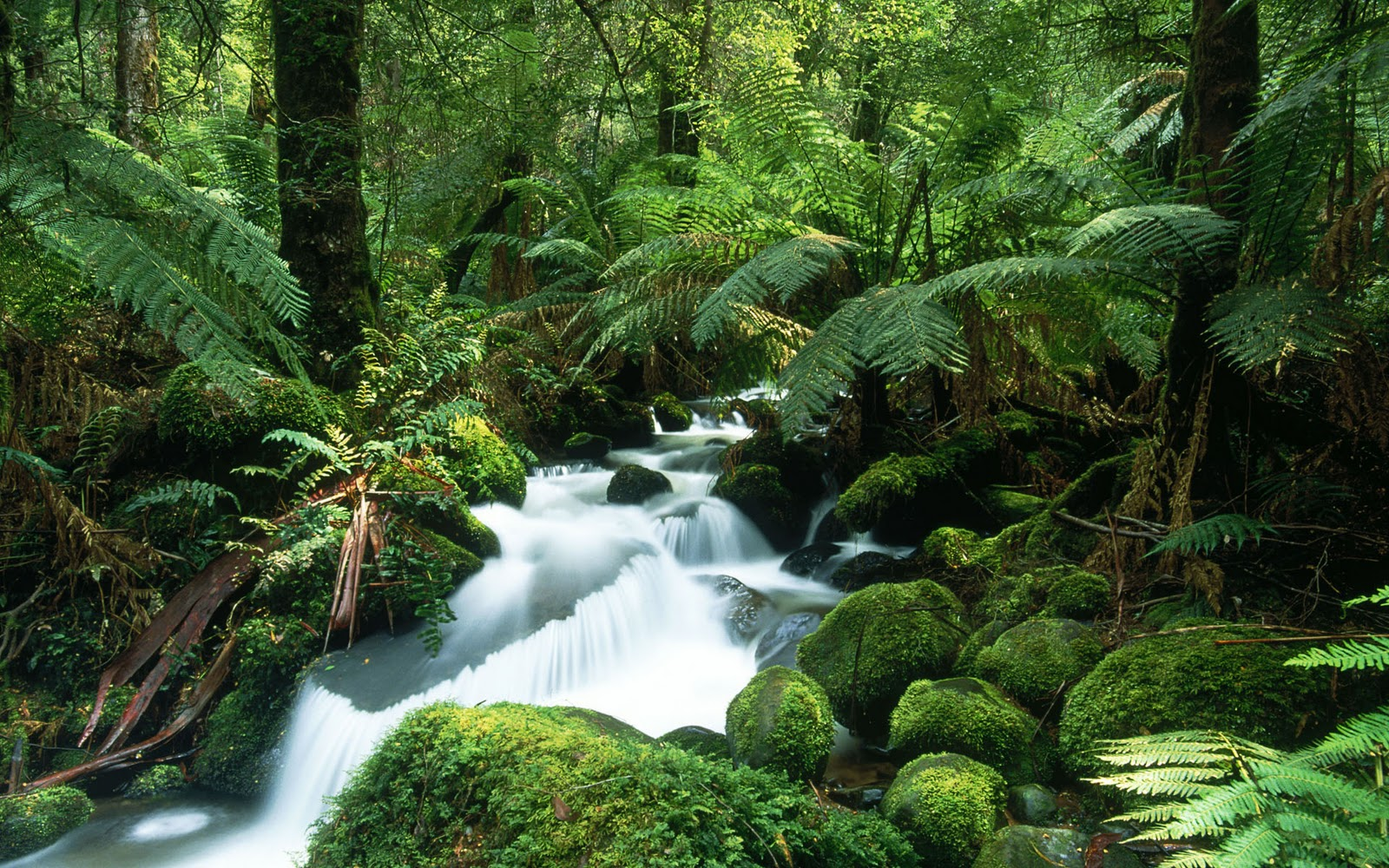 Tropical rain forest new high definition wallpapers for Home wallpaper jungle
