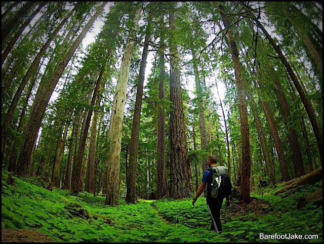 elwha trail