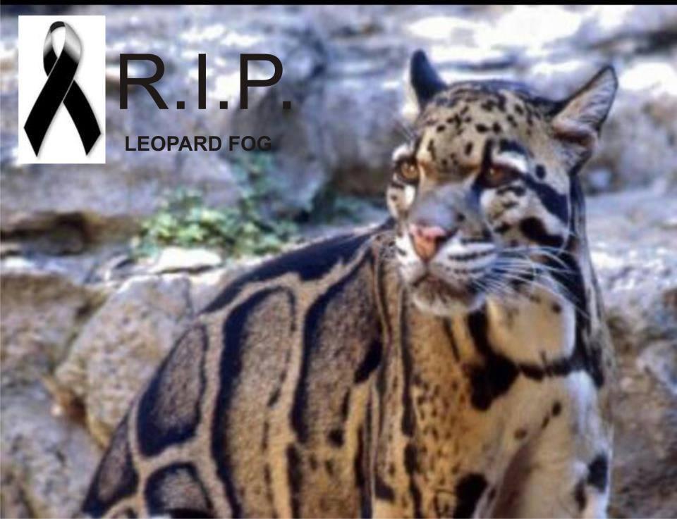 imagenes de animales extintos - Top 10 animales en peligro de extinción
