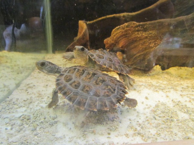 Turtle Base Blog: Can You Keep Fish With Turtles?