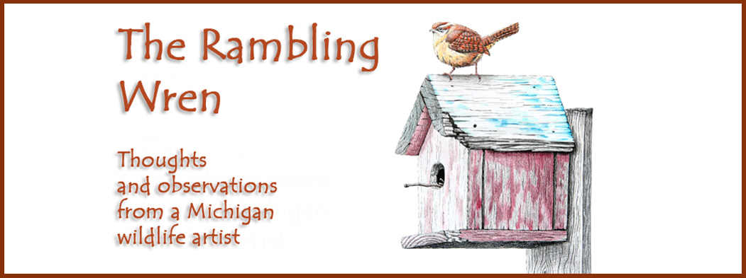 The Rambling Wren