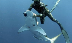Diver Puts Shark In Trance To Remove Hook From Mouth