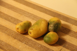 Green potatoes on cutting board