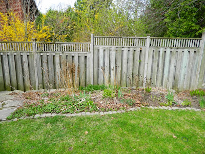 Garden cleanup Graydon before by Paul Jung Gardening Services Toronto