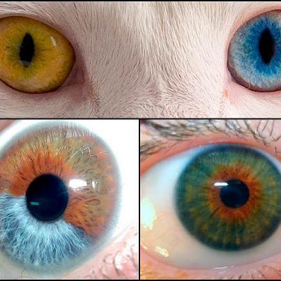 Cor Dos Olhos um Olho Tem Cor Diferente