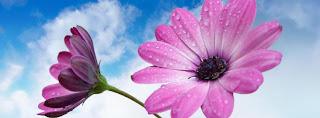 Ảnh bìa hoa đẹp dành cho timeline Facebook