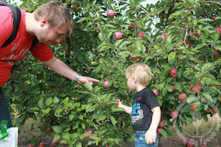 Apple Picking in Russel Orchard