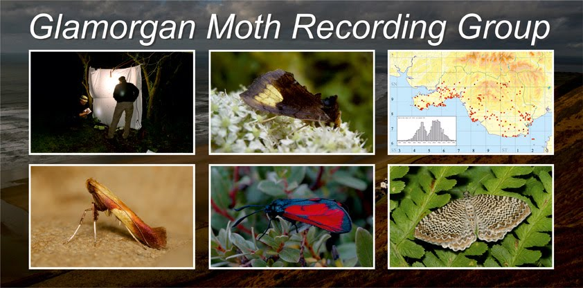 Glamorgan Moth Recording Group