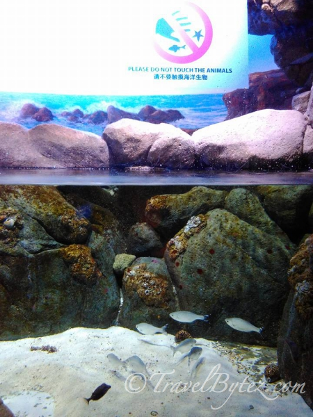 S.E.A. Aquarium @ Sentosa