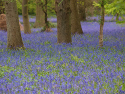 Visit the Harcourt Arboretum website