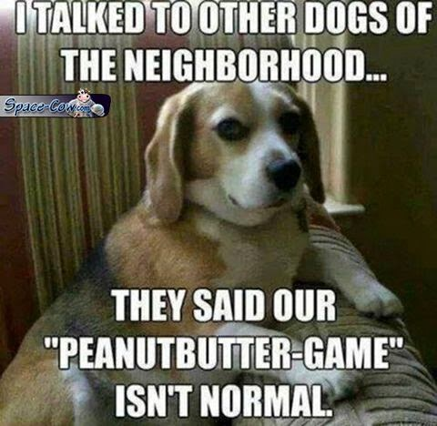 funny animals dogs humor
