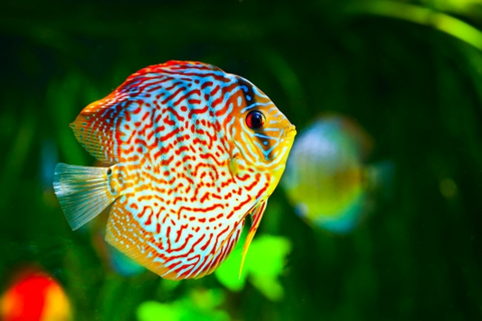 fish wallpapers