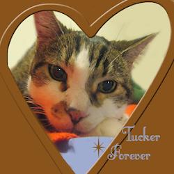 RIP TUCKER