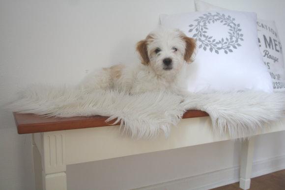 Neuer Hund auf neuer Bank