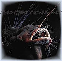 A enorme boca permite que, ao encontrar suas presas, o diabo do mar capture o maior número possível delas, já que nem sempre é fácil conseguir alimentos em seu habitat. Os espinhos são sensores. Vive a até 3 400 metros de profundidade