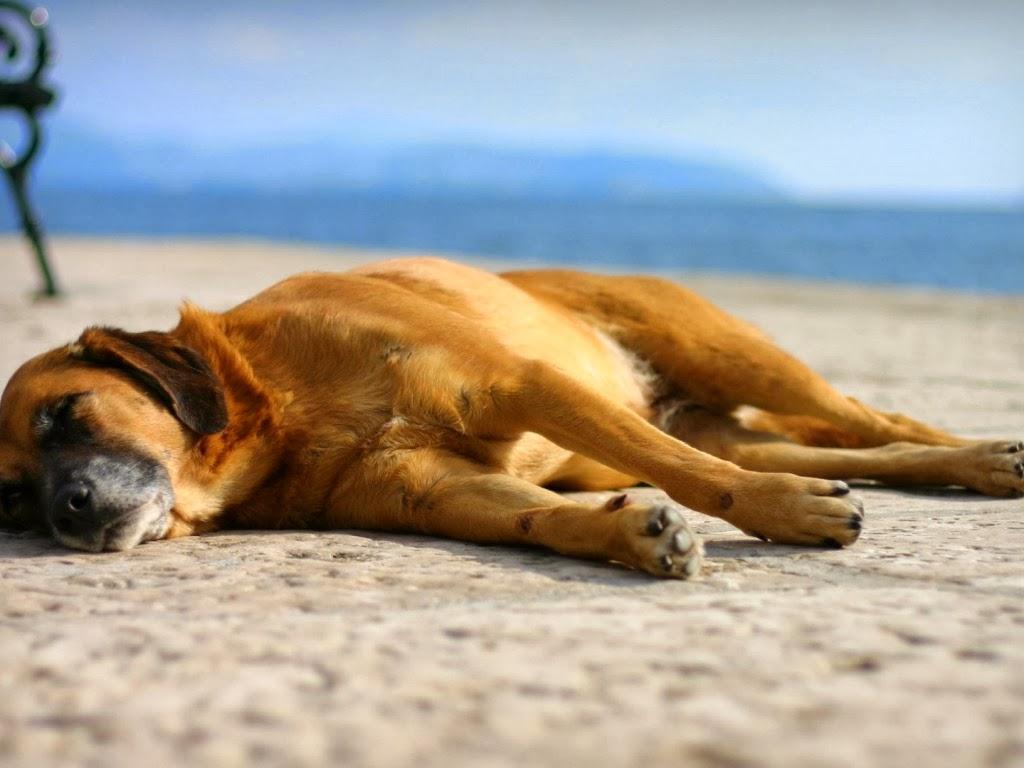 """<img src=""""http://4.bp.blogspot.com/-twPUZ4cLTbs/Utqcw51N6OI/AAAAAAAAI0A/CbJieRL9Lgo/s1600/beach-dog.jpeg"""" alt=""""beach dog"""" />"""