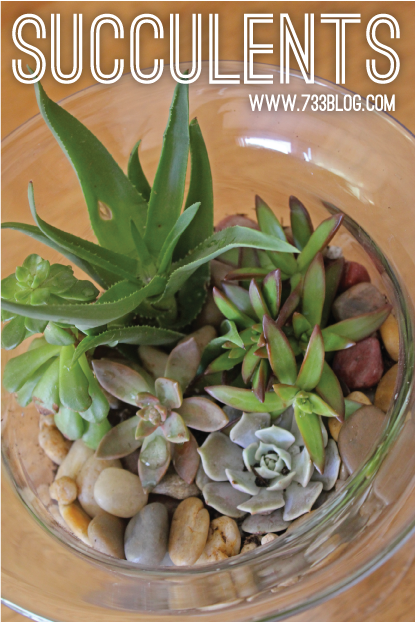 Succulent Dish Garden Creating Caring Seven Thirty Three