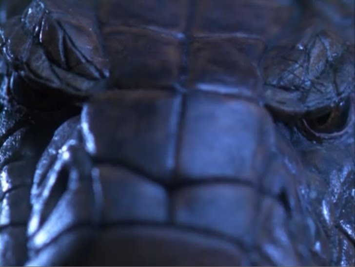 Direct To Video Connoisseur Images King Cobra 1999
