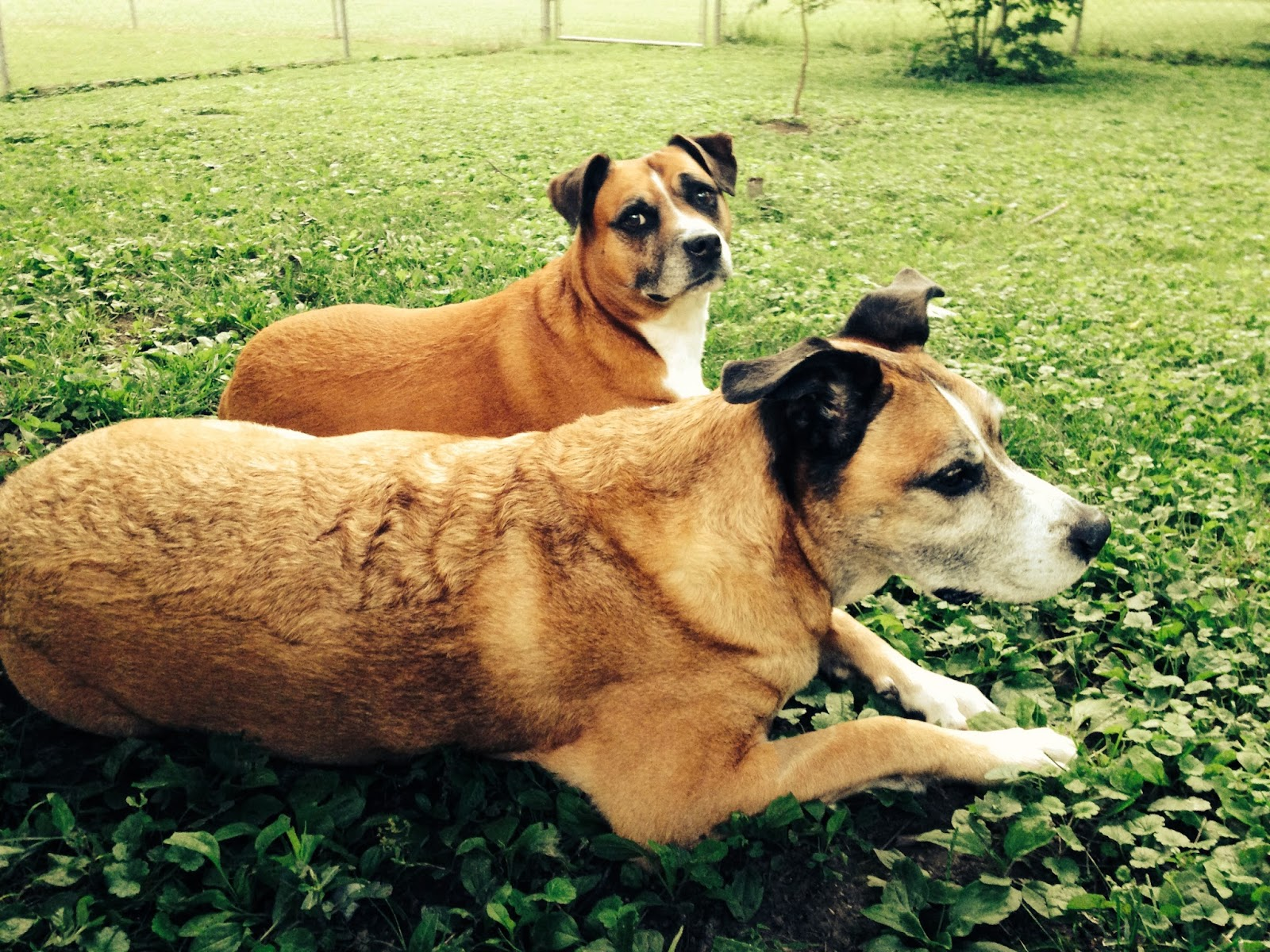 confessions of a composter dog waste causes composting woes