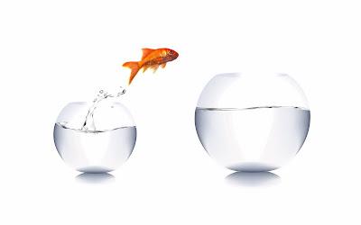 Jumping goldfish wallpapers