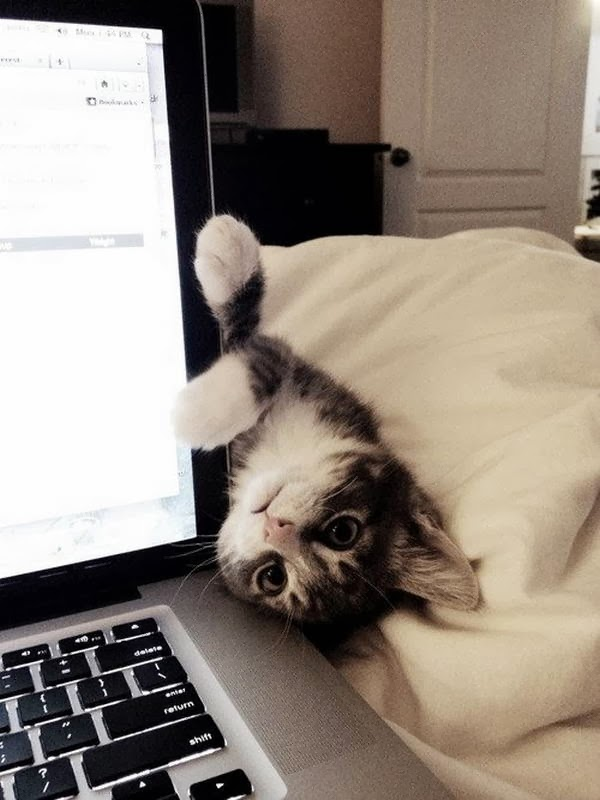 Funny cats - part 90 (40 pics + 10 gifs), cute cat picture