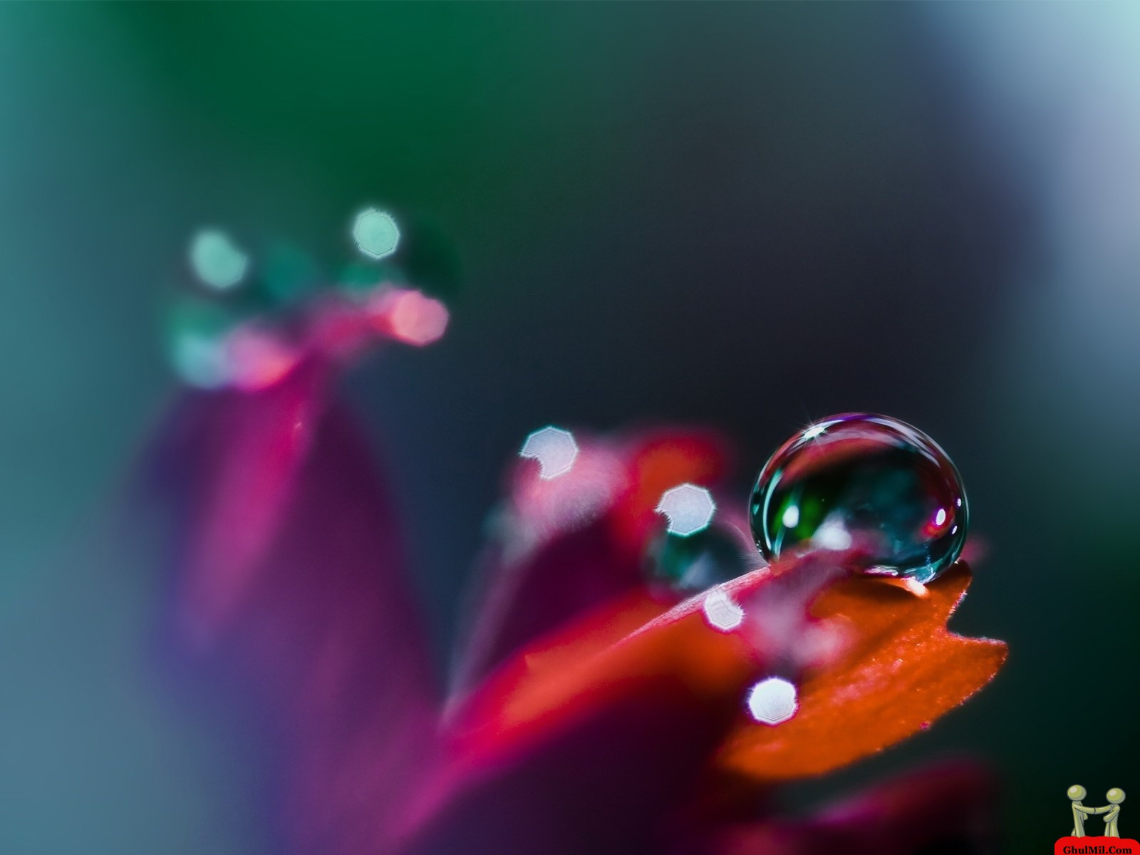 Dew drops hd wallpaprs for Papier peint pour pc