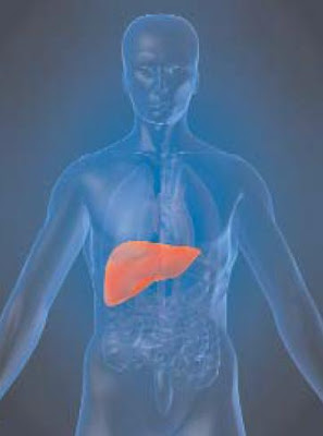 talasemia hati hepatitis