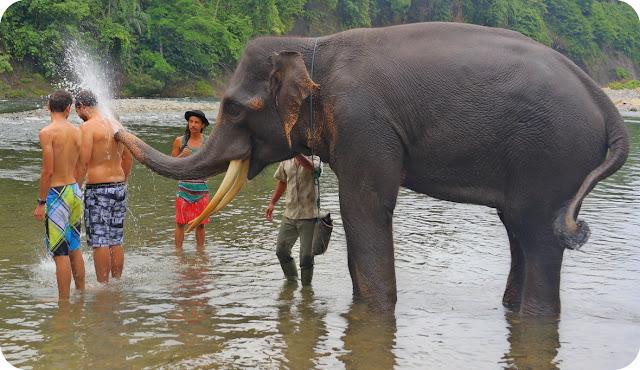 Gajah Tangkahan Taman Nasional Gunung Leuser