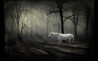 Fantasy White Horse in the Forest wallpaper