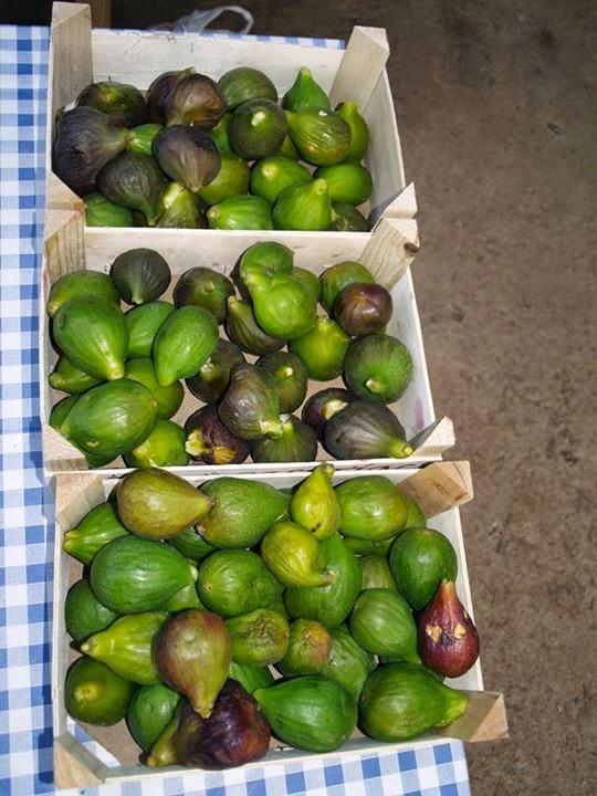SON MUT NOU : Montserrat Pons Boscana figs leaves benefits