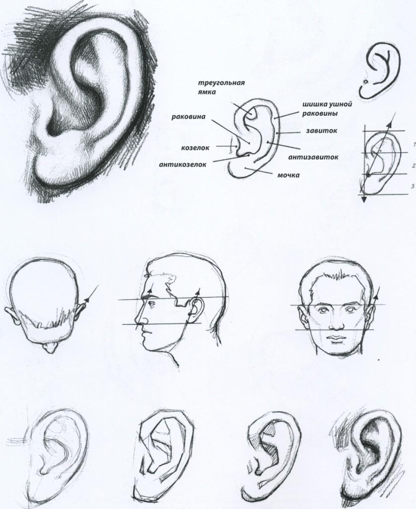 Как правильно рисовать ухо карандашом ...: risovatportretkarandashom.blogspot.com/2012/12/blog-post_3787.html