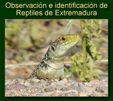 http://iberian-nature.blogspot.com.es/p/ruta-tematica-observacion-de-anfibios-y.html