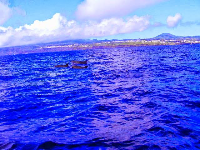 Sea Colours Azores