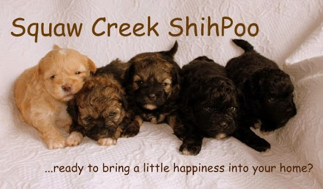 Squaw Creek Shihpoo