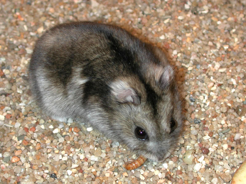 the day i got my hamster How-changing-hamsters-sleep-cycle by chris sherwood chris sherwood 2009-01-28 how-changing -hamsters-sleep if you continue to slowly increase the amount of time you are handling and playing with the hamster during the day, they will slowly change their body's sleep cycle over to night.