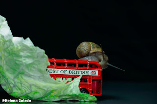 fotografia do caracol com miniaturas de icons ingleses e a folha de couve