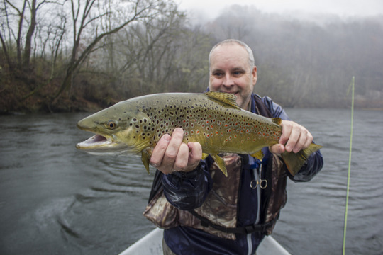 Large Caney Fork brown trout