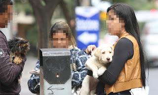 Ontem, filhotes eram vendidos normalmente na Rua da Bahia, apesar de proibição do Código de Posturas. PMs e fiscais fizeram apenas advertências